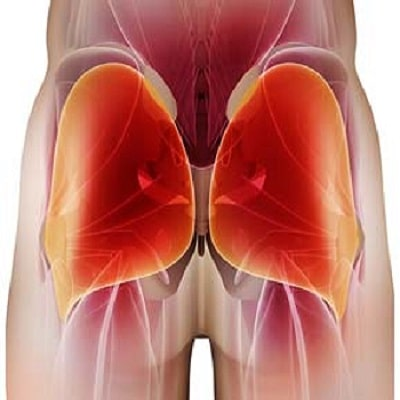 glute-muscle